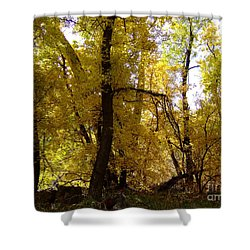 Fall Colors 6169 Shower Curtain