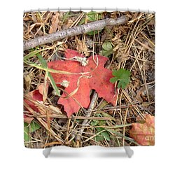 Fall Colors 6307 Shower Curtain by En-Chuen Soo