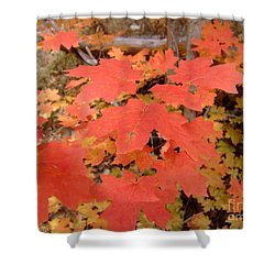 Fall Colors 6308 Shower Curtain