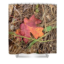 Fall Colors 6312 Shower Curtain