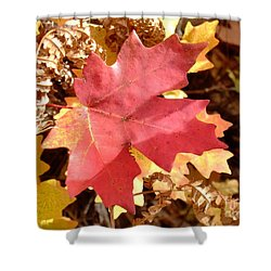 Fall Colors 6313 Shower Curtain by En-Chuen Soo