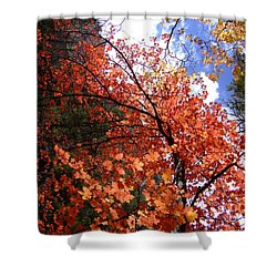 Fall Colors 6340 Shower Curtain