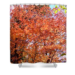 Fall Colors 6357 Shower Curtain by En-Chuen Soo