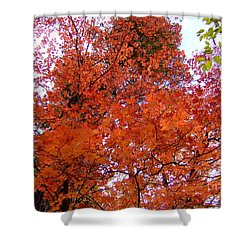 Fall Colors 6359 Shower Curtain by En-Chuen Soo