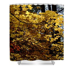 Fall Colors 6372 Shower Curtain by En-Chuen Soo