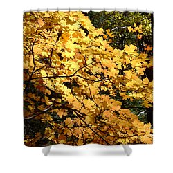 Fall Colors 6407 Shower Curtain by En-Chuen Soo