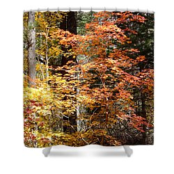 Fall Colors 6412 Shower Curtain by En-Chuen Soo