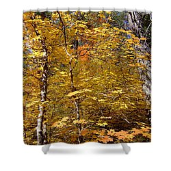 Fall Colors 6446 Shower Curtain by En-Chuen Soo