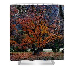 Fall Foliage At Lost Maples State Park  Shower Curtain