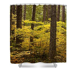 Fall Foliage Shower Curtain by Belinda Greb