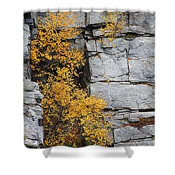 Fall Foliage Colors 01 Shower Curtain