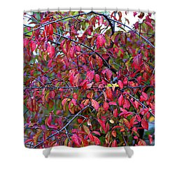 Fall Foliage Colors 05 Shower Curtain