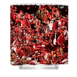 Fall Foliage Colors 08 Shower Curtain