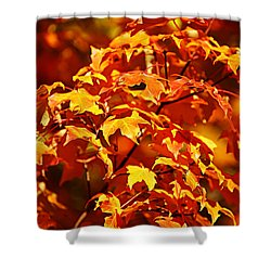 Fall Foliage Colors 14 Shower Curtain