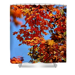 Fall Foliage Colors 15 Shower Curtain