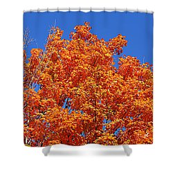 Fall Foliage Colors 19 Shower Curtain