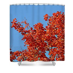 Fall Foliage Colors 20 Shower Curtain