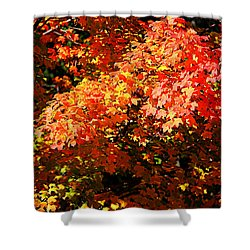 Fall Foliage Colors 21 Shower Curtain
