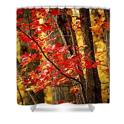 Fall Forest Detail Shower Curtain by Elena Elisseeva