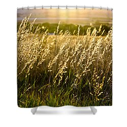 Fall Glow Shower Curtain by Juli Ellen