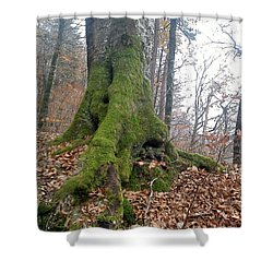 Shower Curtain featuring the photograph Fall In Burgdorf by Felicia Tica