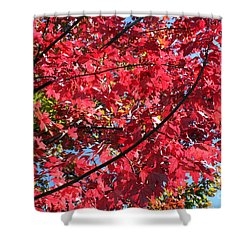 Shower Curtain featuring the photograph Fall In Illinois by Debbie Hart