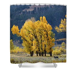 Fall In Yellowstone Shower Curtain