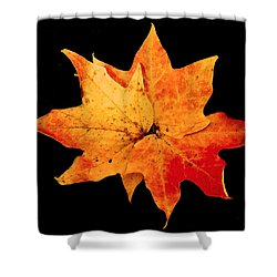 Shower Curtain featuring the photograph Fall Leaf Trio by Dee Dee  Whittle