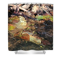 Shower Curtain featuring the photograph Fall Leaves by Ann E Robson
