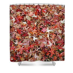 Fall Leaves Shower Curtain by Bev Conover