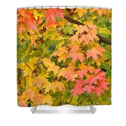 Fall Leaves Maple Tree Shower Curtain by Dan Friend