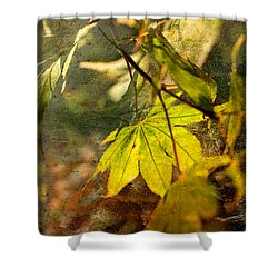 Shower Curtain featuring the photograph Fall by Liz  Alderdice