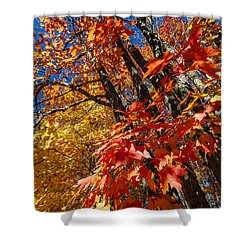 Fall Maple Forest Shower Curtain by Elena Elisseeva