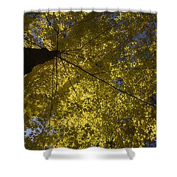 Fall Maple Shower Curtain by Steven Ralser