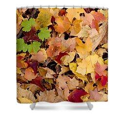 Fall Maples Shower Curtain by Steven Ralser