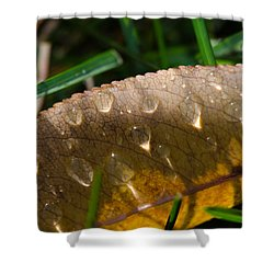Fall Morning Leaf And Dew Shower Curtain