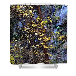 Fall On The West Fork Trail Shower Curtain