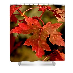 Fall Red Beauty Shower Curtain
