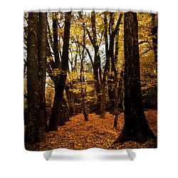 Fall Scene In Bidwell Park Shower Curtain