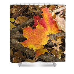 Fall Shower Curtain by Steven Ralser