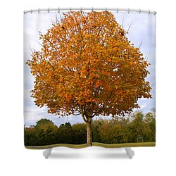 Fall Sugar Maple Shower Curtain by Melinda Fawver