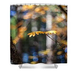 Fall Suspended Shower Curtain by Aaron Aldrich