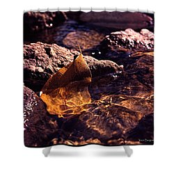 Shower Curtain featuring the photograph Fall by Travis Burgess