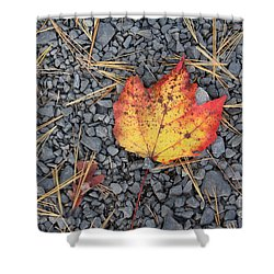 Shower Curtain featuring the photograph Fallen Leaf by Dora Sofia Caputo Photographic Art and Design