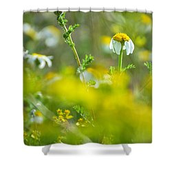 Fallen Petals Shower Curtain by Guido Montanes Castillo