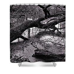 Fallen Tree Shower Curtain by Dariusz Gudowicz
