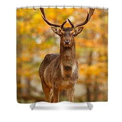Fallow Deer In Autumn Forest Shower Curtain