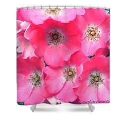Trellis Pinks Shower Curtain by Anna Porter