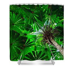 Shower Curtain featuring the photograph Fan Palm Tree Of The Rainforest by Peta Thames