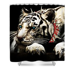 Fanciger Shower Curtain